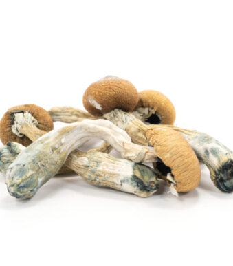 Buy Albino Penis Envy Mushrooms - Legal Weed Store Plug