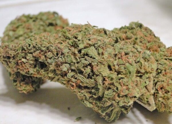 Buy 1oz White Rhino Strain Online - Legal Weed Store Plug